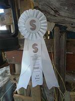 3rd place Grande Award Steveston Salmon Festival