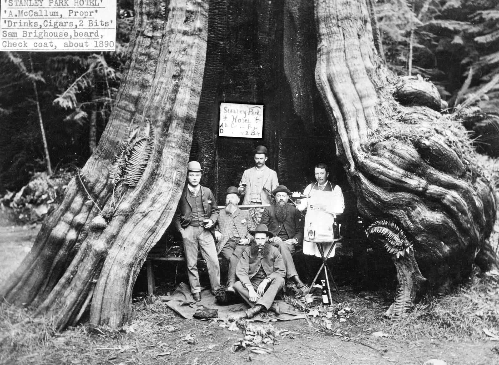 The Hollow Tree In Stanley Park, BC