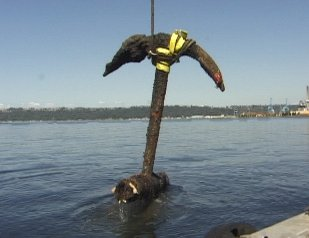 Large Anchor retrieved in 1993